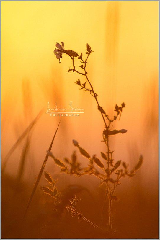 Kuldses valguses