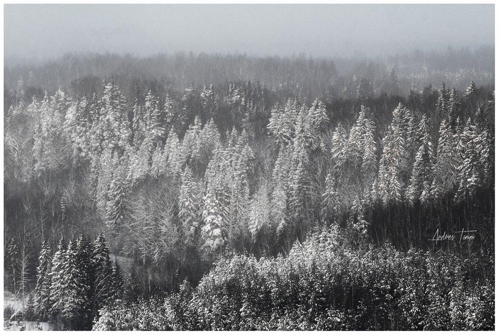 Ehitud puud
